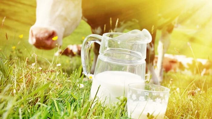 Bebeklerde İnek Sütü Kullanımı
