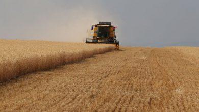 Photo of Tarım Ürünleri Üretici Fiyat Endeksinde Artış Yaşandı