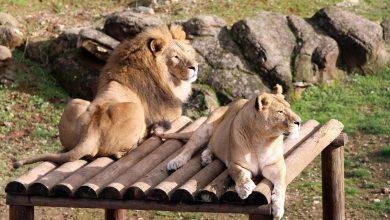 Photo of Gaziantep Hayvanat Bahçesi 5 milyon ziyaretçi çekmeyi hedefliyor